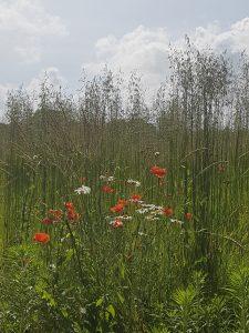 nature fleurs sauvages